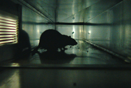 Rats: il trailer del documentario horror sui ratti