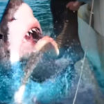 47 Meters Down: Uncaged – Cast e data di release per il sequel di 47 Metri
